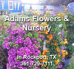 Adams Nursery Mark Gorman And Steve Fischer 1515 Hwy 35 South Rockport Tx 78382 3829 361 729 7111 Adamsplants1515 Gmail