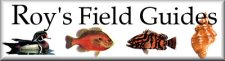 Roy's Field Guides, Rockport, Texas